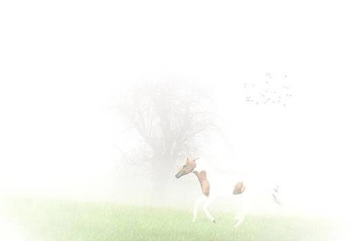 Emily Stauring - Foggy Romp