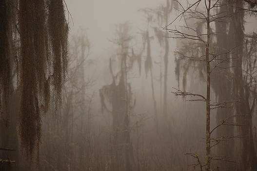 Foggy Swamp by Daniel Young