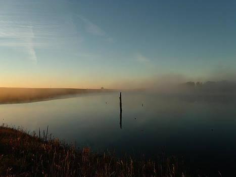 Foggy Wood at Dawn by Brian  Maloney