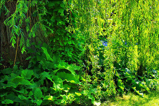 Foliage Covered Willow by Cathy Leite Photography