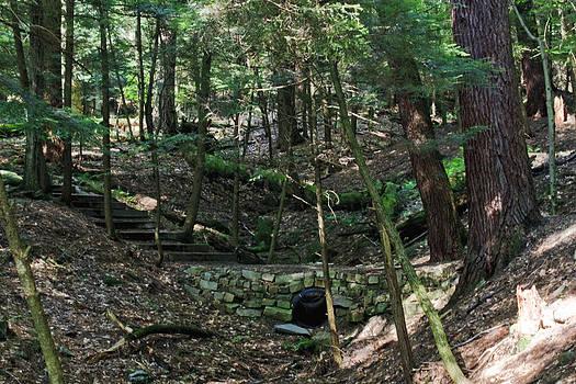 Darlene Bell - Follow The Forest Trail