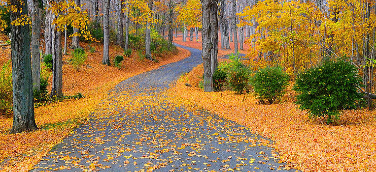 Randall Branham - follow the yellow leaf road