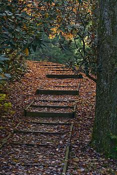 Darlene Bell - Forest Climb