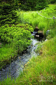 Elena Elisseeva - Forest creek in Newfoundland