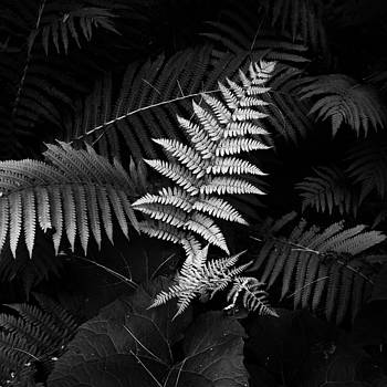 Forest Ferns by Mike Southern