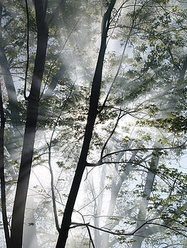 Forest Fire Vertical by Jeremy Allen