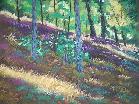 Forest Floor by Cynthia Riley