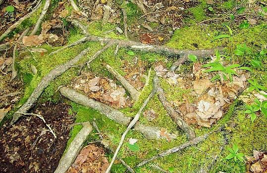 Forest Floor by KJ Waters
