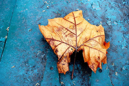 Forest Gem by David Rothschild