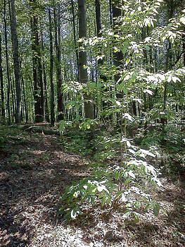 Forest I by Maia Nara