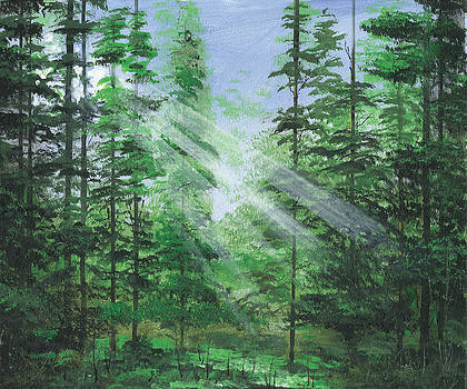 Forest Lights by Harold Shull