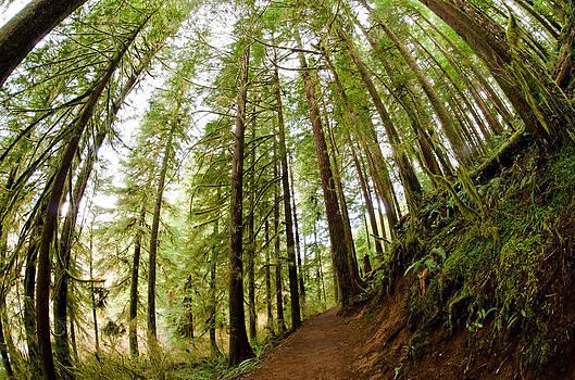 Margaret Pitcher - Forest Love