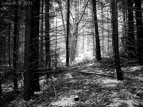 Forest by Lucy D