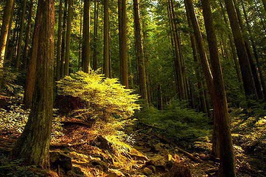 Forest by Matt  Trimble