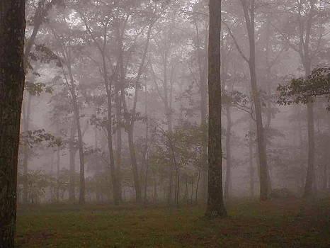 Frank SantAgata - Forest Mist
