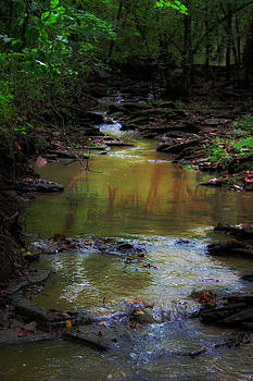 Forest Stream With Tree Reflections by Kris Napier