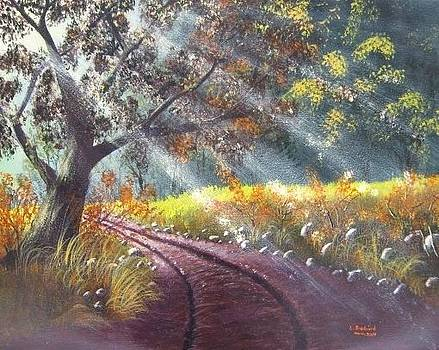 Forest sunbeams by Lorraine Bradford