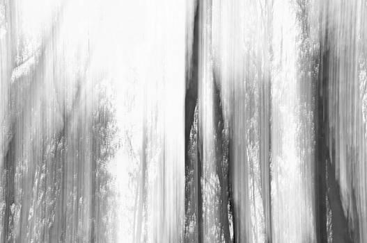 Forestry experience BW by Daniel Kulinski