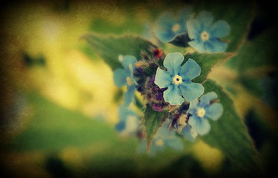 Forget Me Not by Martha Hughes
