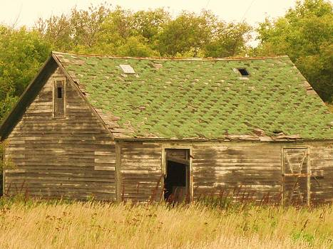 Forgotten Homestead by Trish Pitts