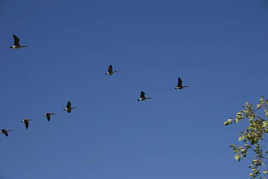 Nina Fosdick - Formation Flying