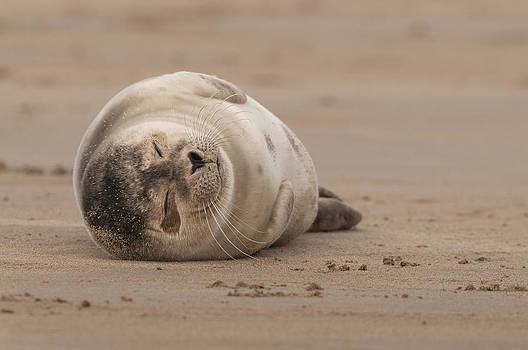 Forty Winks by Andy Astbury