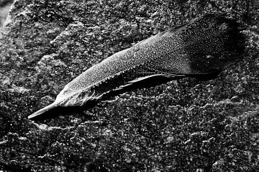 Fossil by Daniel Kulinski