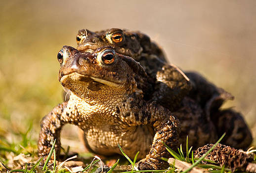 Four Eyed Toad by Andy Stuart