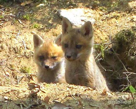 Fox Den Dawn by Chuck Berk
