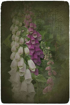 Fox Gloves  by Diane Smith