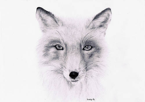 Fox by Lucy D