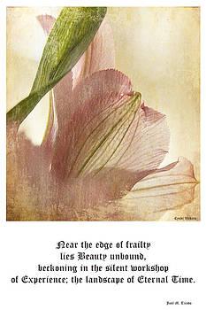 Frail Beauty by Cynthia Vickers - Jose M Tirado