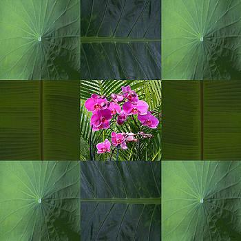 John Neville Cohen - Framed Orchids Card
