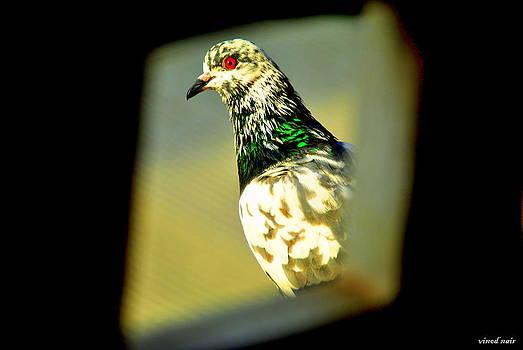 Framed by Vinod Nair