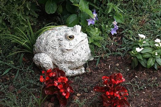 Freddy Frog by Sheri Bartay