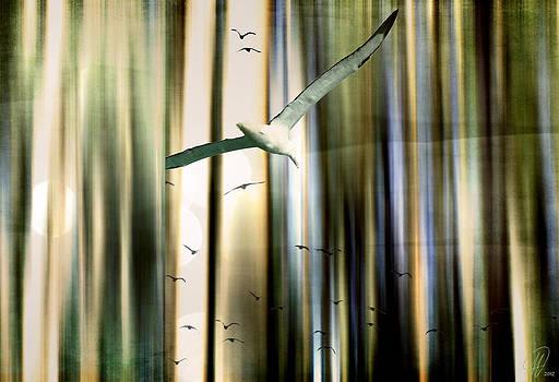 Freedom Flight by Margaret Hormann Bfa