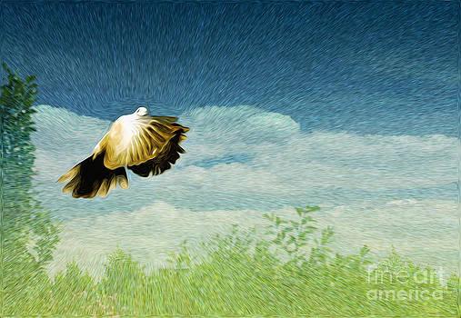 Freedom by Zsuzsanna Szugyi