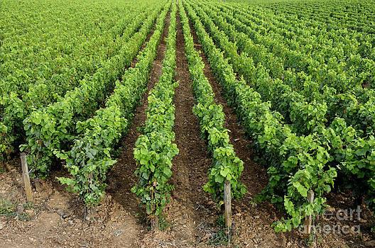 BERNARD JAUBERT - French vineyard