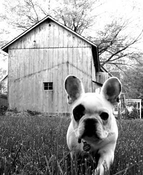 Frenchie by Shannon OBrien