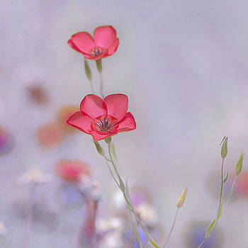 Fresh Air by Joel Olives