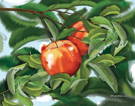 Fresh Apples by Pat Thompson