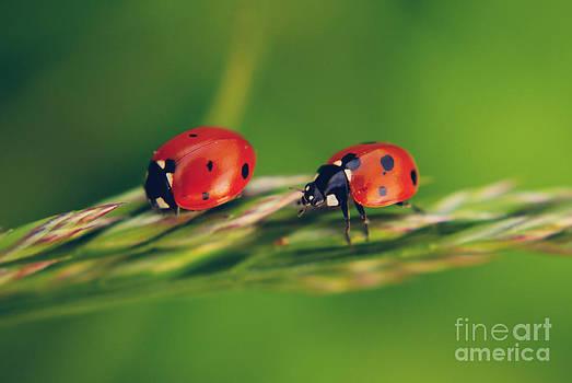 Friends by Ekaterina LaBranche