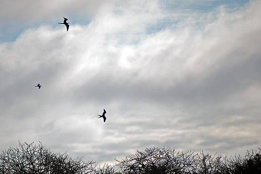 Harvey Barrison - Frigates in Flight