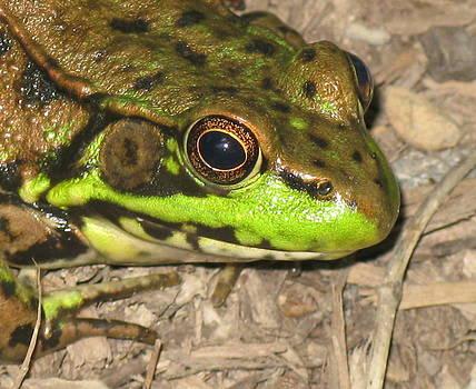 Frog by Debbie Finley