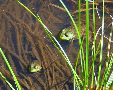 Frog Family by Kristal Kobold