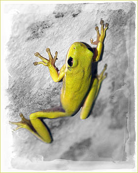 Frog by Fuad Azmat