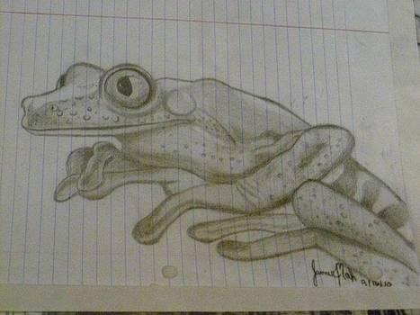 Frog by Jamie Mah