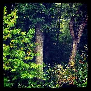 From My Window~ #trees by Lia Kent