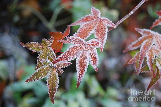 Frost by Nancie Teresa