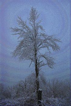 Nina Fosdick - Frost Tree